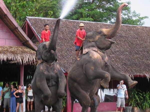 River Kwai With Elephant Safari & Bamboo Rafting